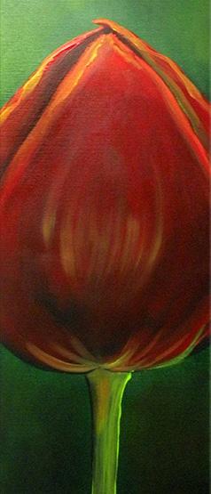 Longstem Tulip